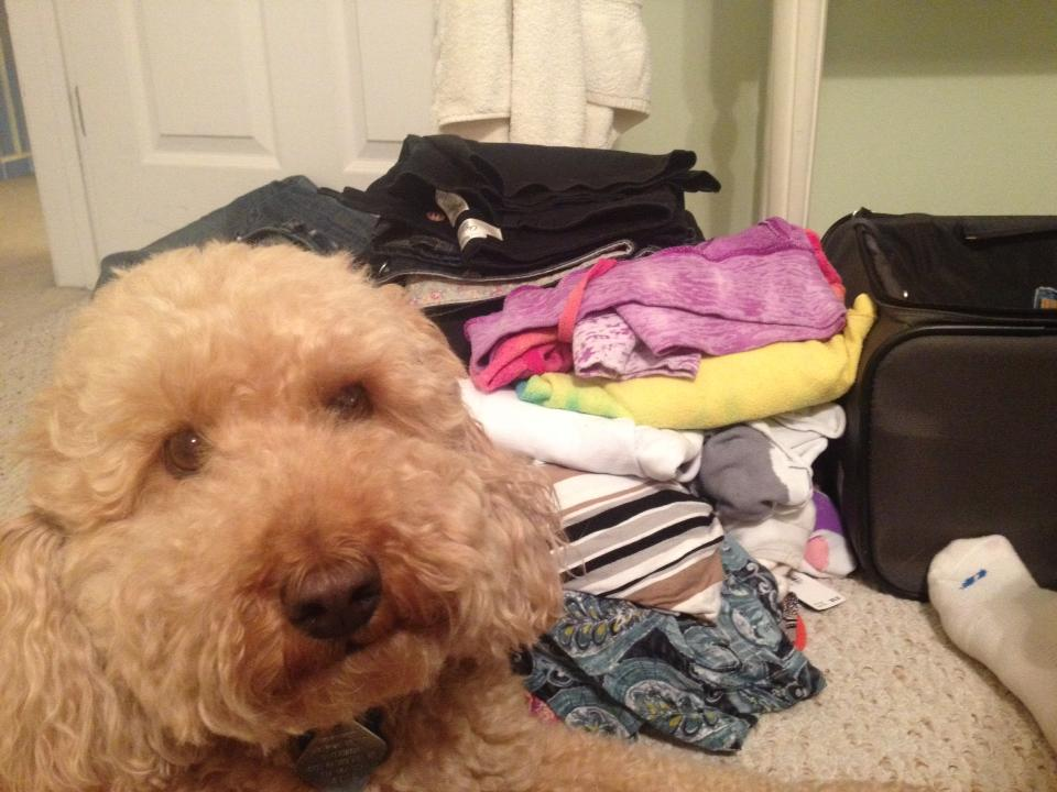 A dog's final plea: don't go on vacation! Please!