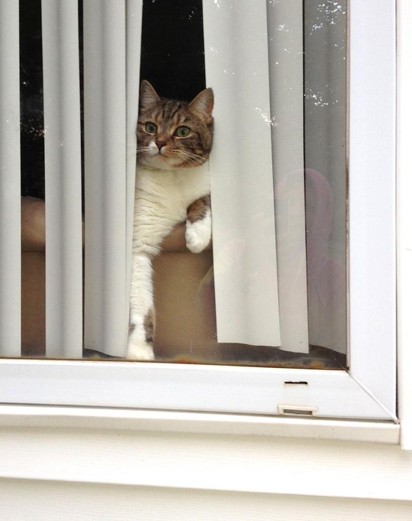 cute cat in the window