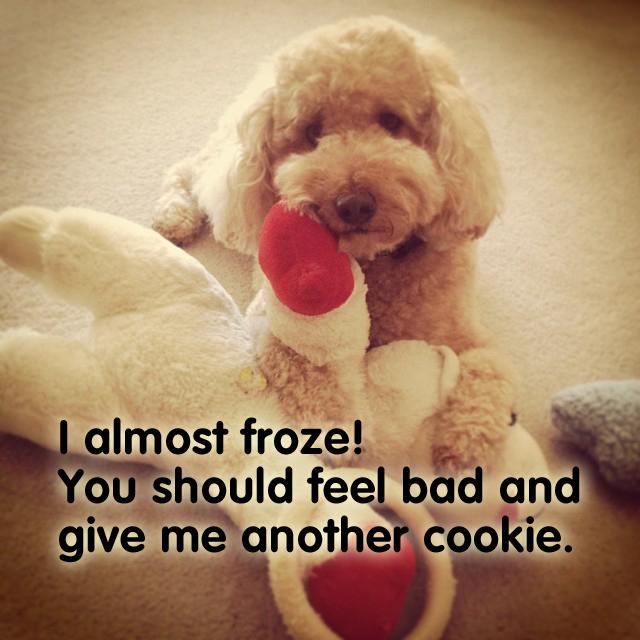 froze
