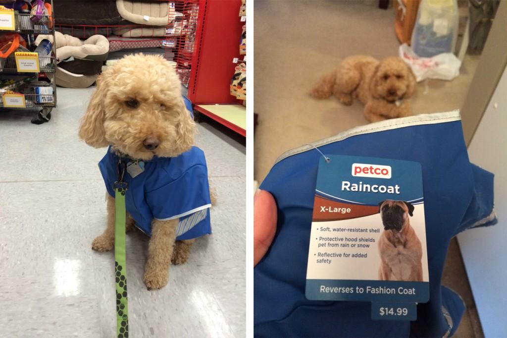 raincoatdog