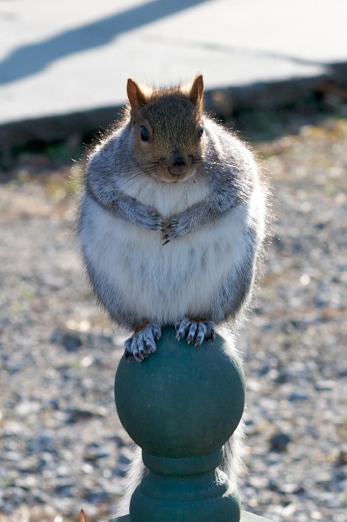 Got acorns?