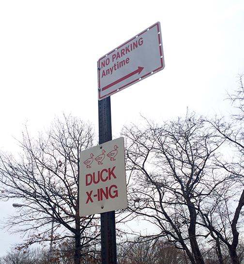 no parking! duck crossing.