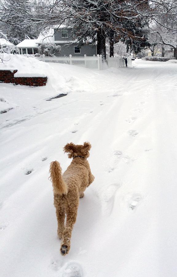 Weee!!!! An unplowed street to run down!!!!