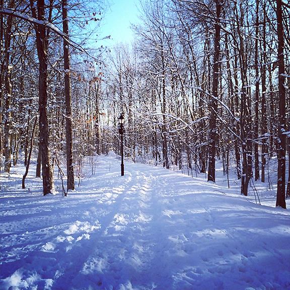park snowscape