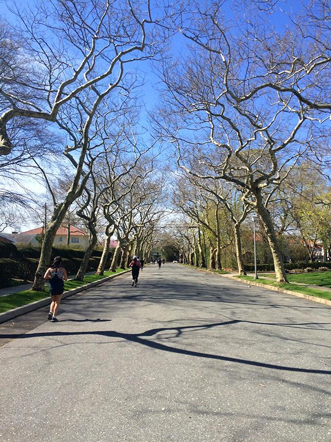 mile14ish-treelined-street