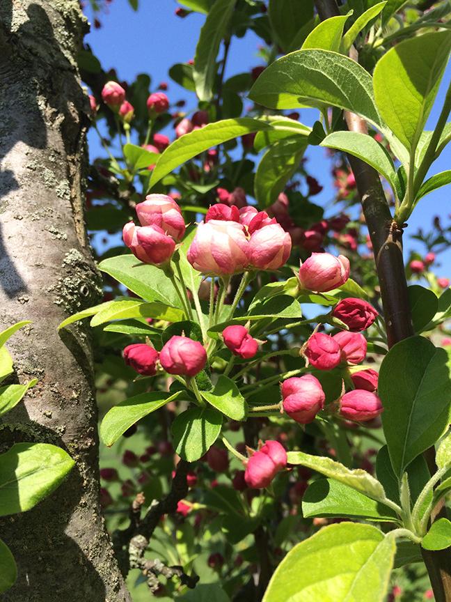 Sweet budding tree and blue skies