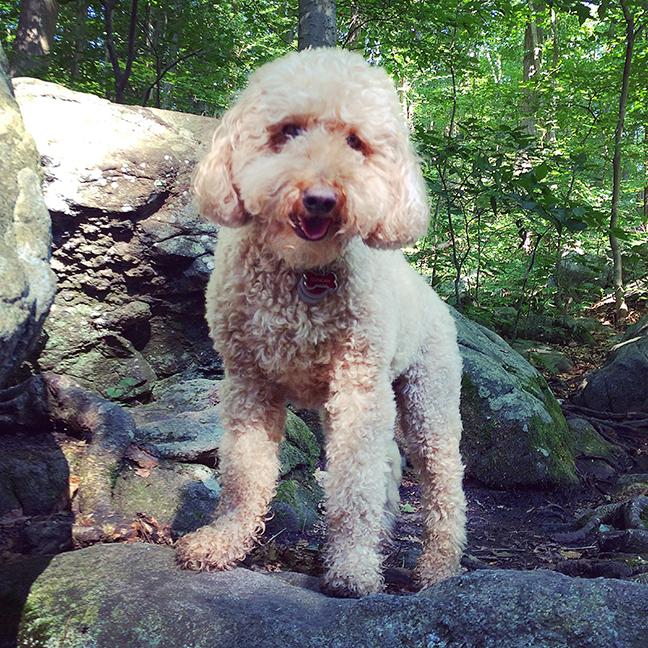 Scales big rocks like superdoodle