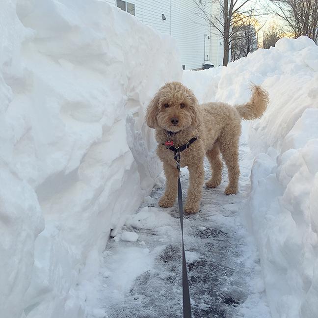 snow-walls