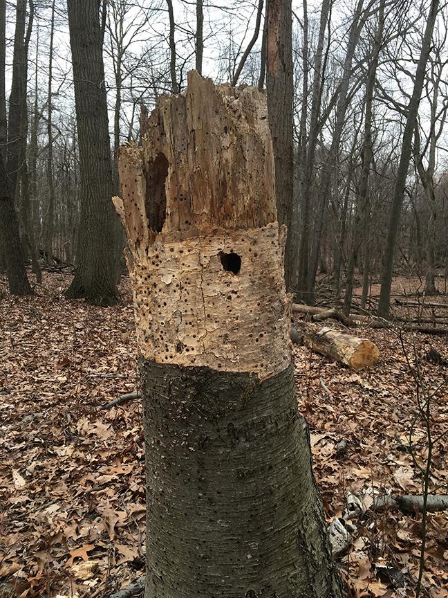 this tree stump spoke to me