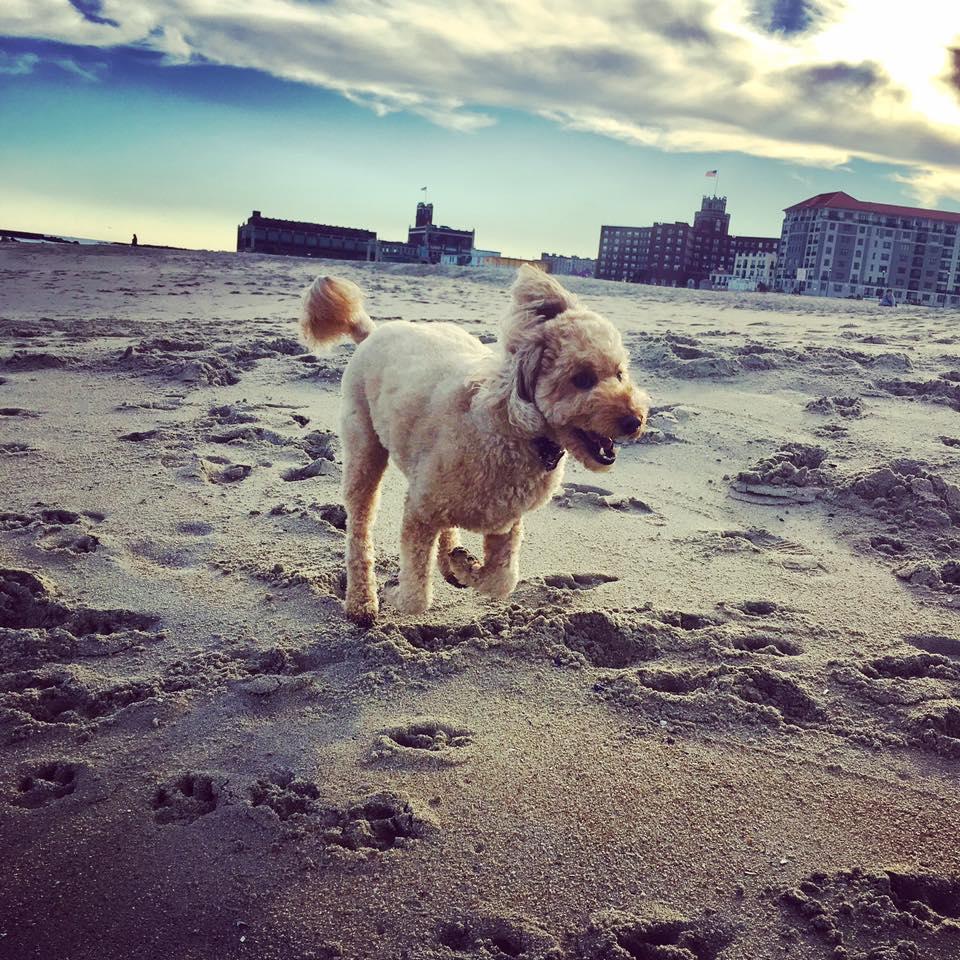 Run free puppy!