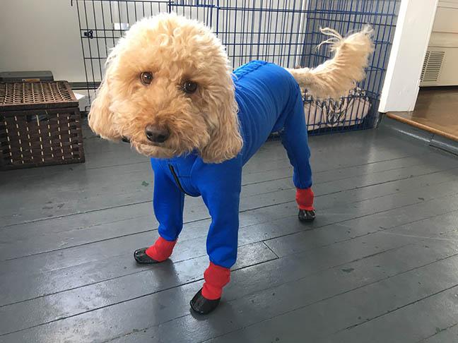 Superdoodle
